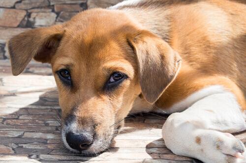 Cucciolo di cane sdraiato sulle zampe