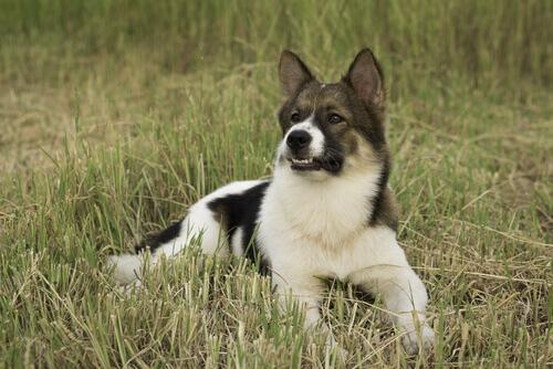 Cani riconosciuti provvisoriamente dalla FCI