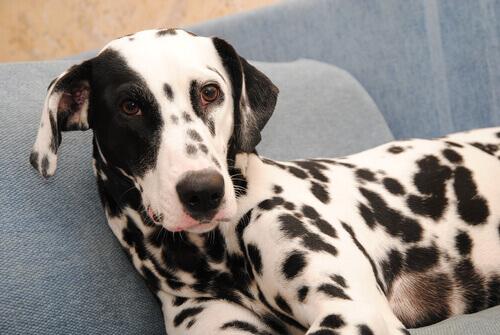 Tumore della pelle nei cani: cause, sintomi e trattamento
