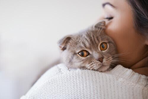 Il virus della leucemia felina: cause, sintomi e trattamento