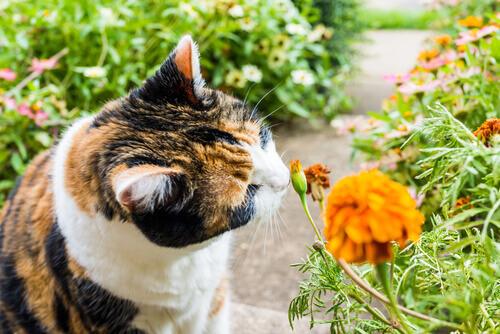 Gatto che annusa un fiore arancione