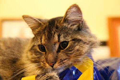 Ricompense per gatti: quali sono i migliori premi?