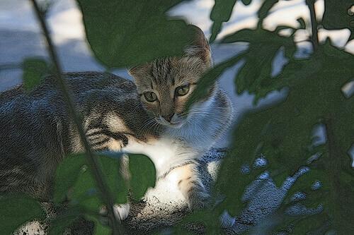 Differenze tra animali selvatici e domestici
