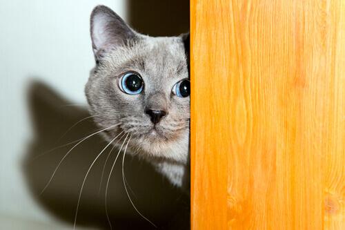 Come conquistare la fiducia del gatto?