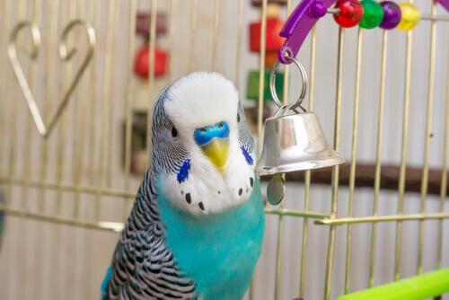 un pappagallino nella sua gabbia