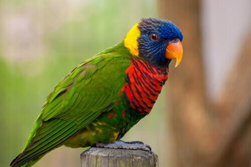 un pappagallo multicolore si riposa su un tronchetto
