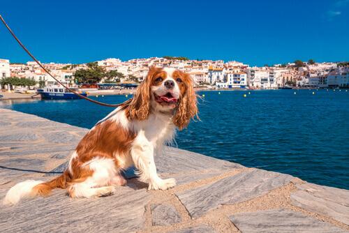 Differenze tra cani di città e cani di campagna