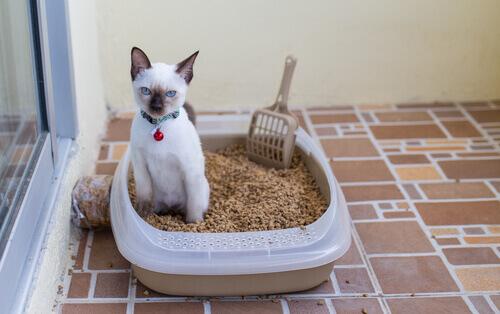 Le malattie delle vie urinarie nel gatto