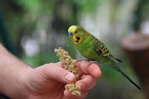 Qual è l'ambiente ideale per i pappagalli?