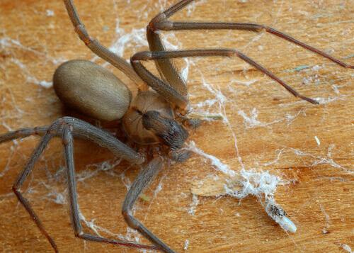 un ragno cammina su una tavola di legno