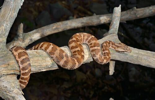 un serpente arrampicato sul ramo di un albero