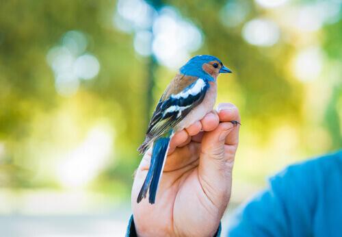 uccello azzurro sulla mano di un ragazzo