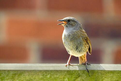 Come riconoscere gli uccelli dal loro canto?