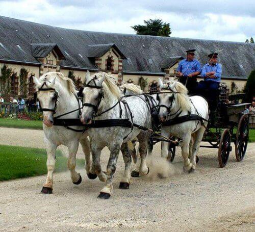 una carrozza trainata da quattro cavalli da tiro bianchi