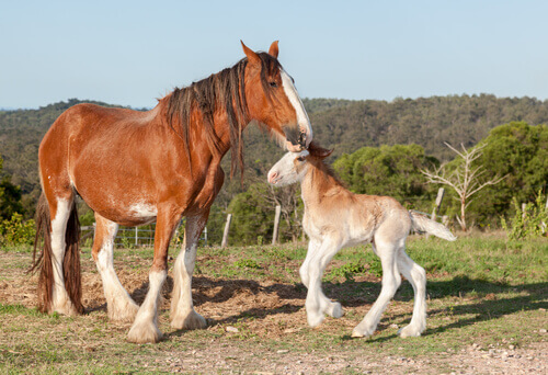 una cavallo con il suo puledro