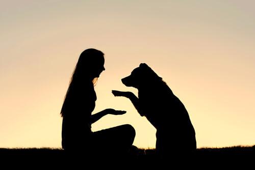 Educare il cane con il metodo gentile