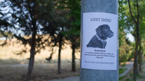 volantino per ritrovare cane smarrito