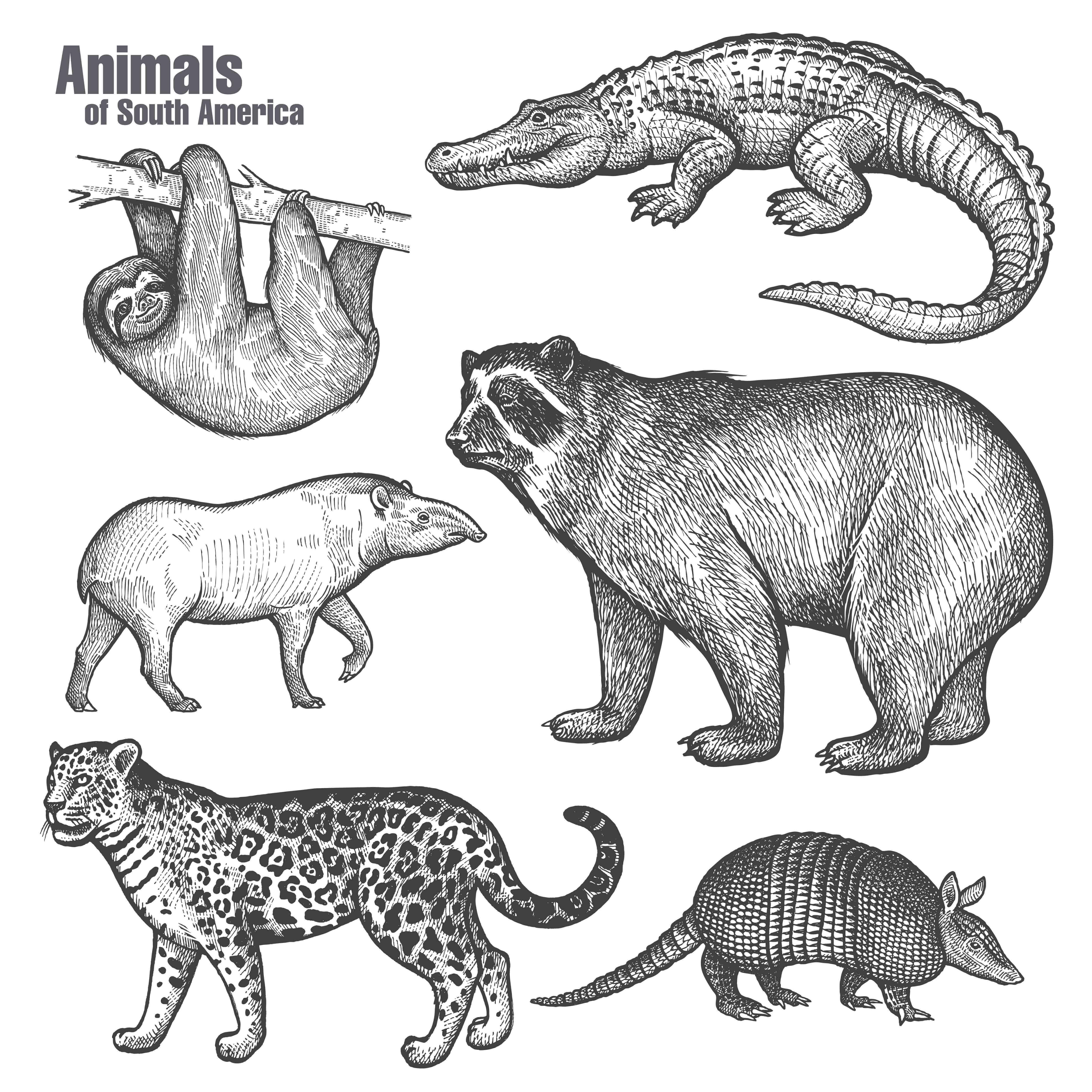 alcuni animali del sudamerica disegnati