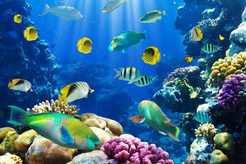 6 curiosità sui pesci che pochi conoscono