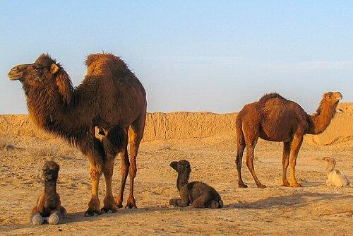 Animali che vivono nel deserto