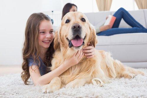 Bambina abbraccia golden retriever in salotto