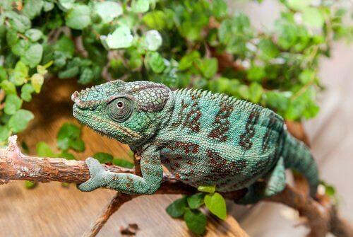Animali che si mimetizzano: tecniche maestre