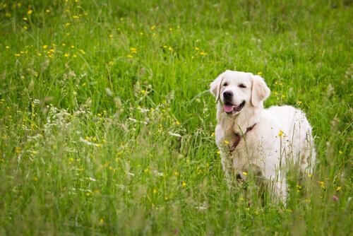 Cancro alla prostata nei cani anziani