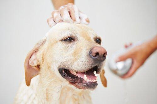 cane appena lavato
