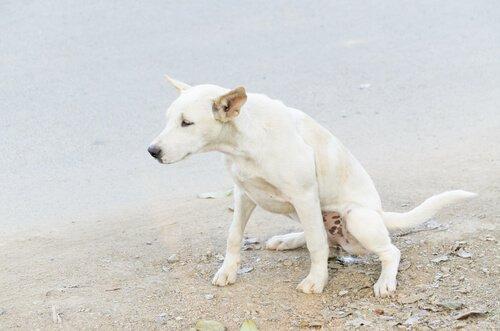 Cane che urina in spiaggia