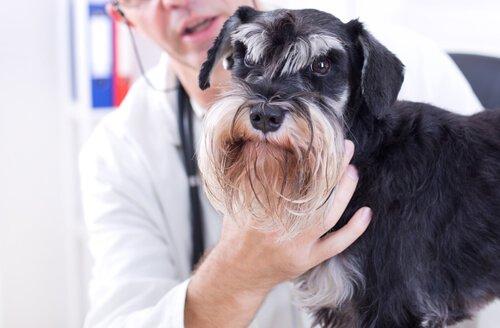 cane che viene visitato dal veterinario