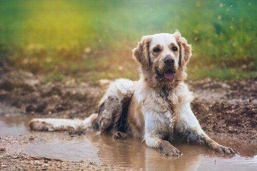 Come evitare il cattivo odore di cane bagnato