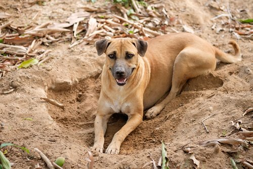 Cane sdraiato dopo aver raschiato il suolo