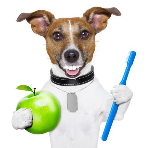 cane sorridente con spazzolino e mela