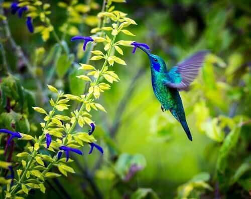 colibrì con fiore in bocca