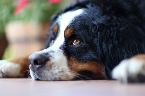 Come evitare che un cane si senta solo?