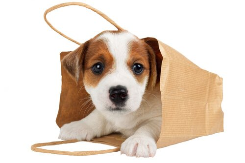 Come portare il cane in una borsa in modo sicuro