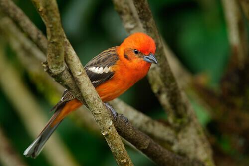 Scopriamo alcune curiosità sugli uccelli