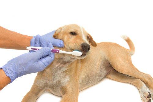 6 migliori prodotti per pulire i denti al cane