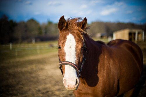 Come scegliere un cavallo di giuste dimensioni