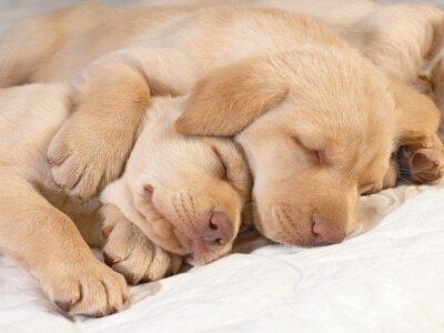 Elaborare un piano sanitario per il vostro cucciolo
