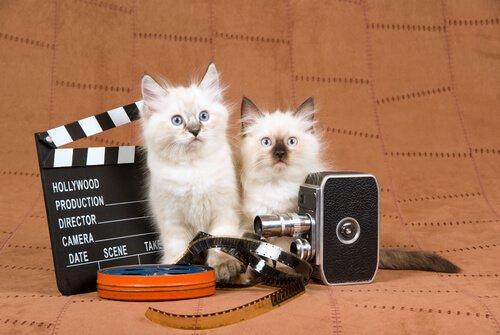 due gatti con alcuni accessori da regista