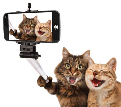 Gatti nei film: ecco i felini più famosi di Hollywood