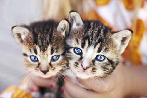 due gattini piccoli tenuti tra le mani da un bambino