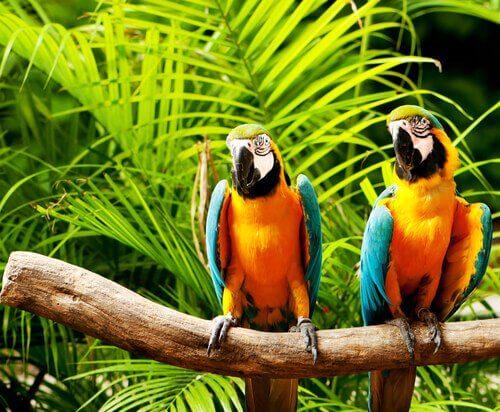 Pappagalli coloratissimi su un ramo