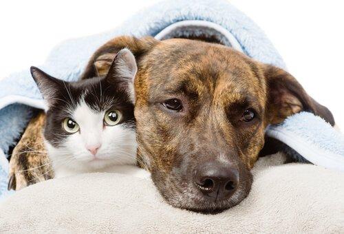 Effetti collaterali degli antinfiammatori in cani e gatti