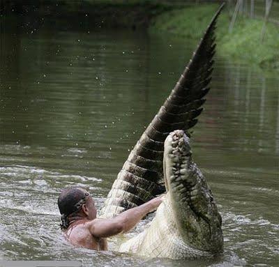 il pescatore Gilberto nuota con il coccodrillo Pocho
