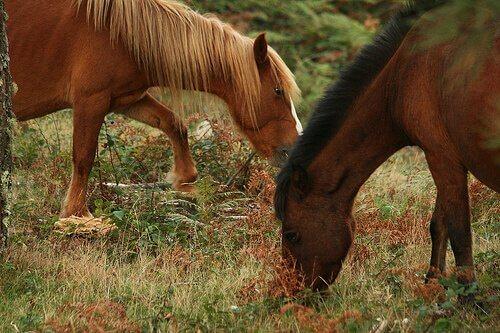 Integratori alimentari per cavalli