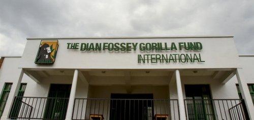 Dian Fossey, la donna che diede la vita per salvare i gorilla