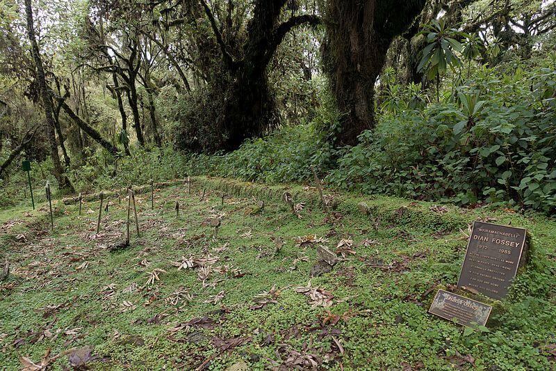 la tomba di Dian Fossey