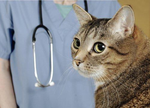 gatto accanto a un veterinario